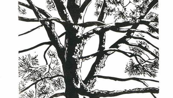 L'arbre au fil du sensible