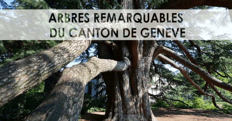 Genève et ses arbres remarquables : une belle histoire