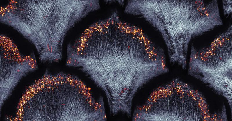 Art et Science: la beauté mystérieuse des systèmes complexes