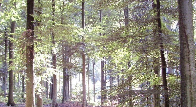La Forêt européenne: entre Passé et Futur 1850-2050